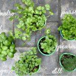 My Ammo Box Herb Garden