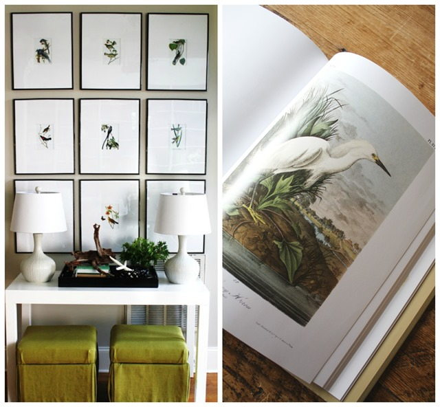 Audubon coffee table book