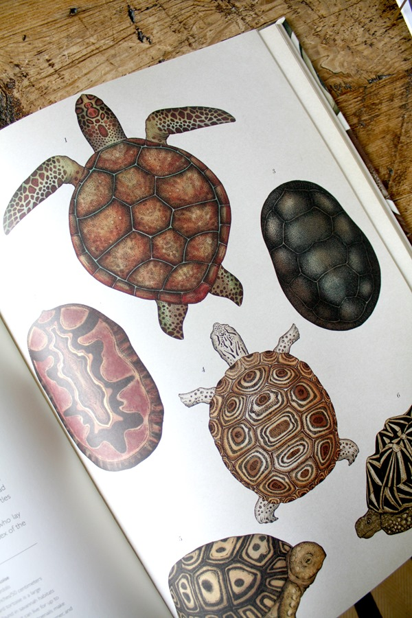animal-book-art