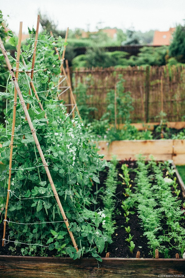 raised-bed-garden-planning