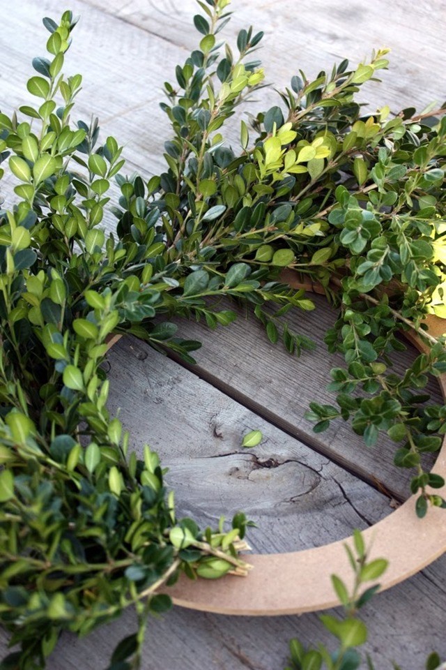 DIY_boxwood_wreath