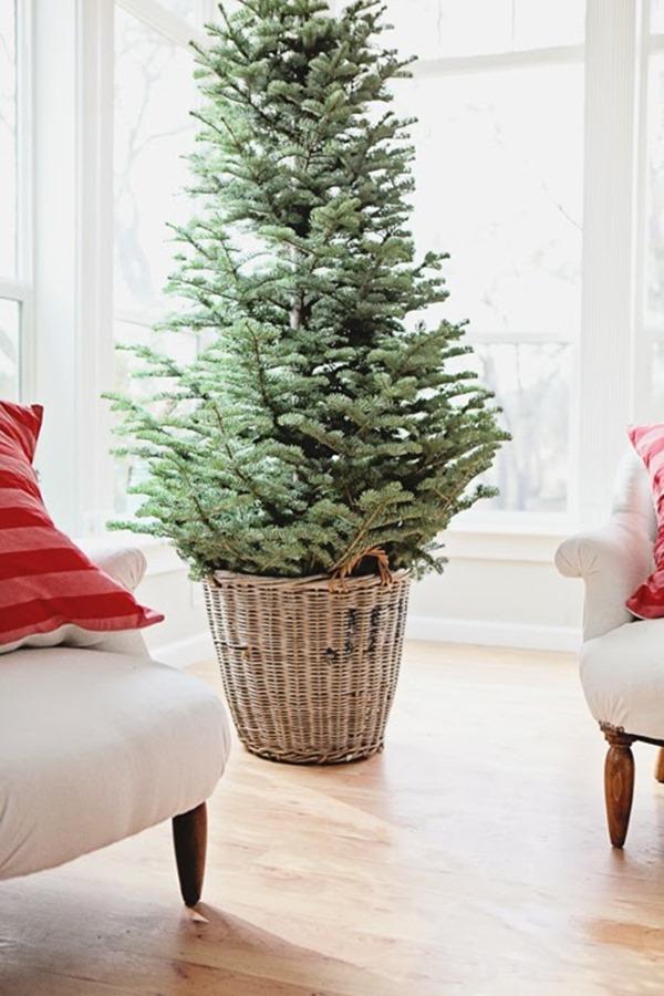 bare-Christmas-tree