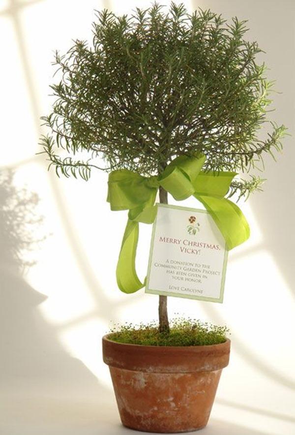 rosemary_topiary