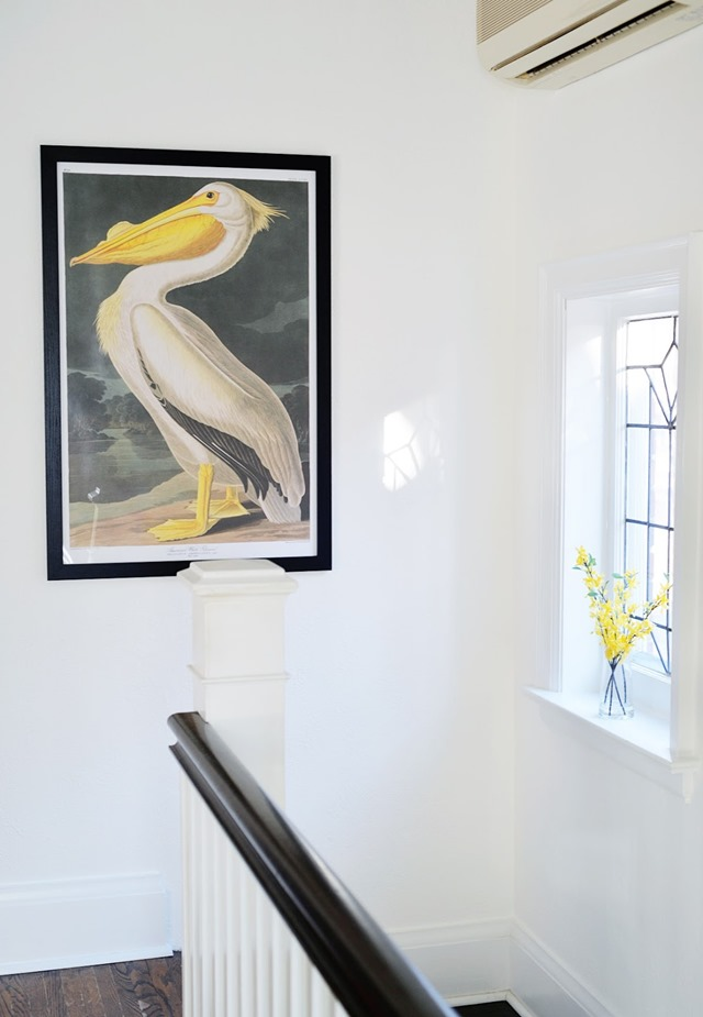 audubon-pelican-print-1
