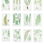 Ready-To-Print Gallery Wall: Fern Botanicals