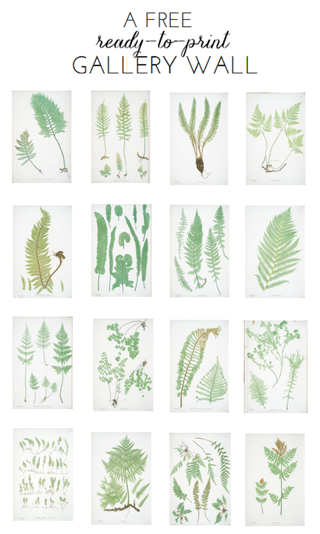 Gallery Wall Prints ready-to-print gallery wall: fern botanicals - emily a. clark