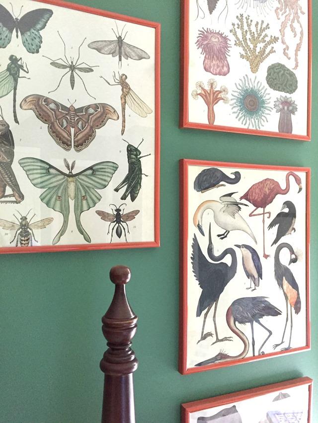 framed_animal_prints