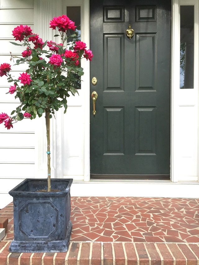 knockout_rose_topiary