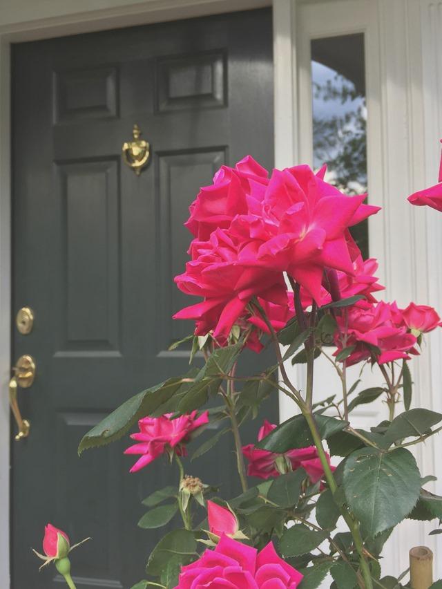 spring_front_door