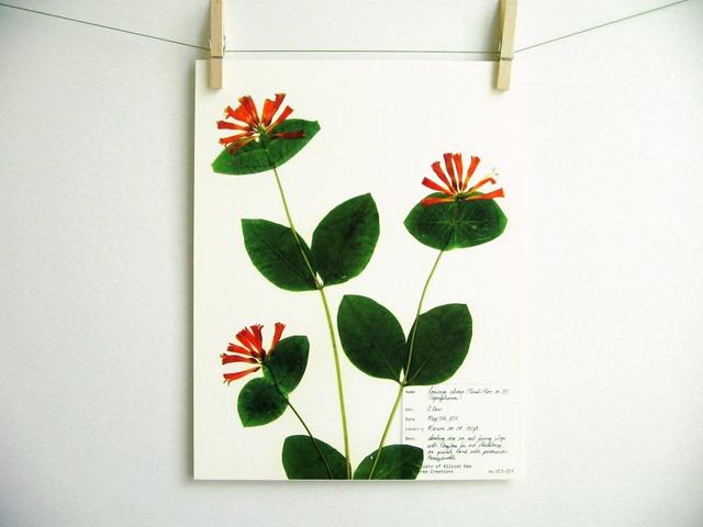 botanical_3