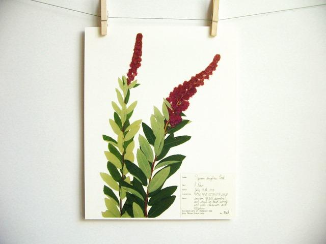 botanical_5