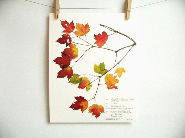 botanical_6