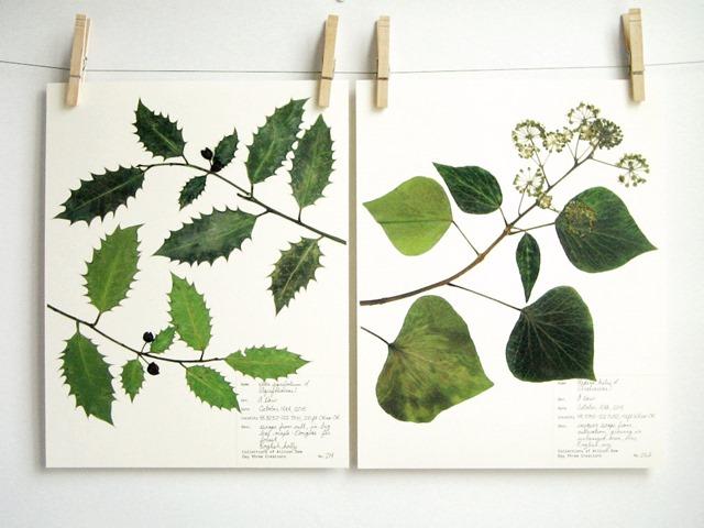 botanical_7