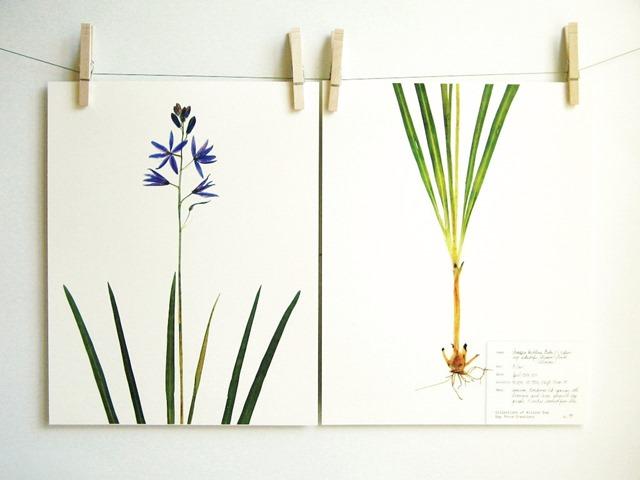 botanical_8