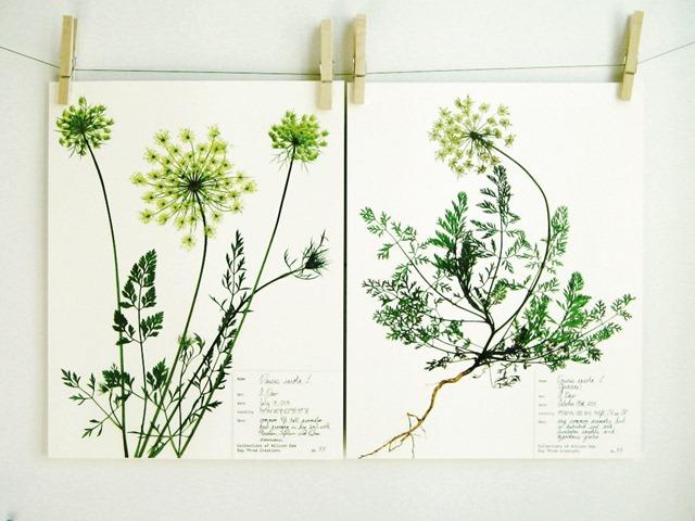 botanical_9