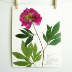 Pressed Botanical Art (An Etsy Shop)