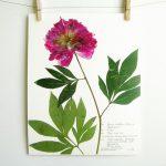 Pressed Botanical Art (An Etsy Shop)