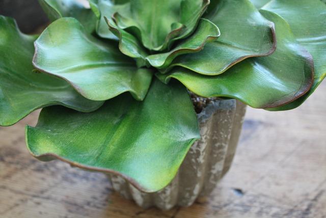 faux cabbage succulent