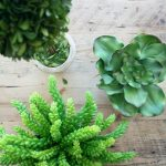 A Few Faux Plants You Might Consider. . .