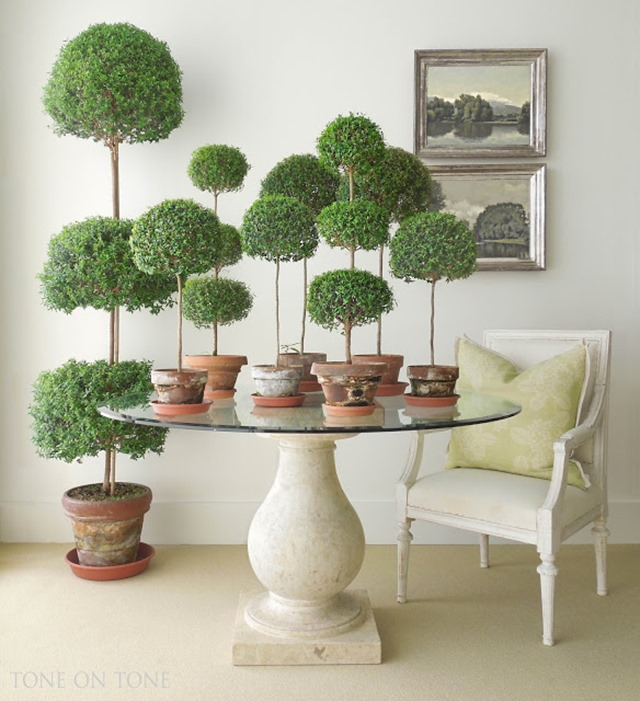 how to grow myrtle topiary