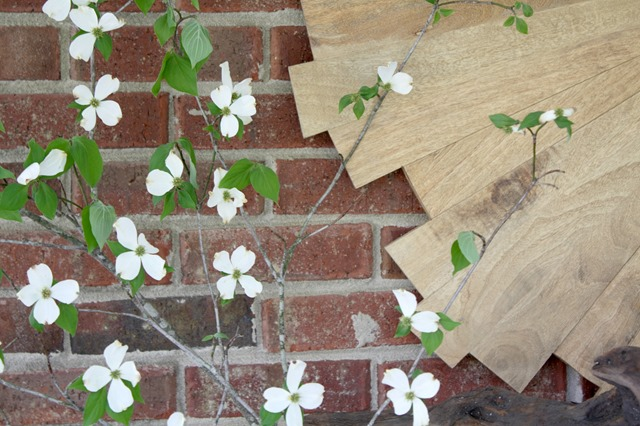 dogwood-branches
