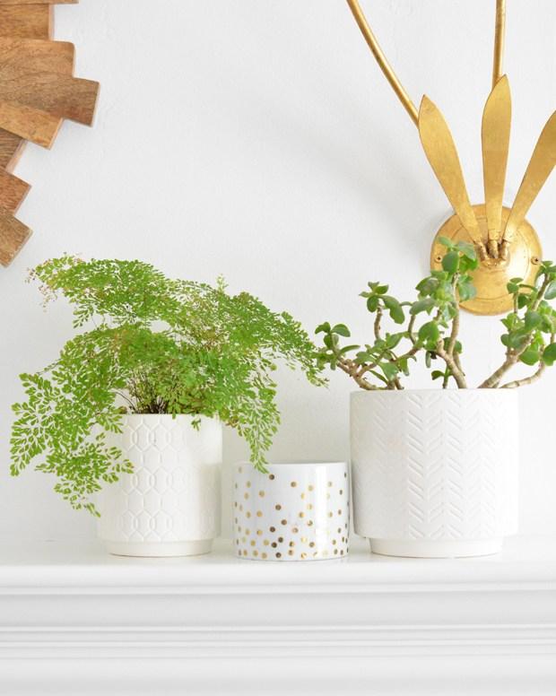 hippest-house-plants