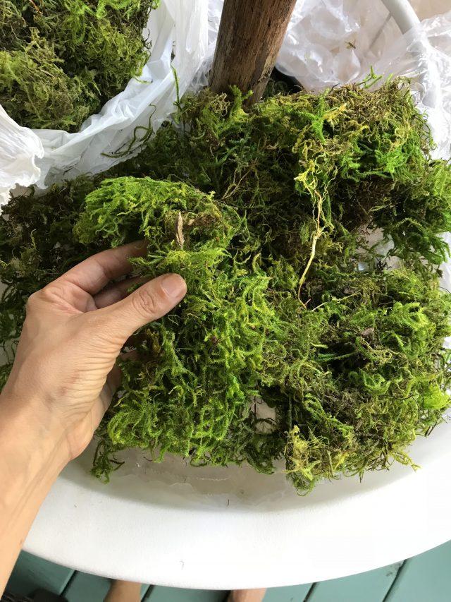moss-planter