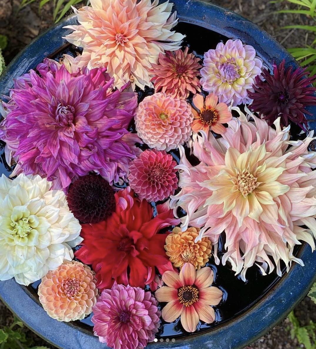 Impatient-Gardener_IG-Saturday6